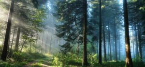Представьте, что Ваша компания - это лес